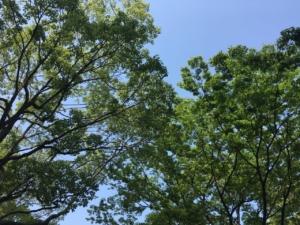 2019年福岡の新緑